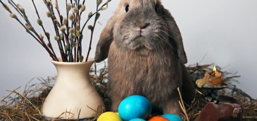 wallpaper conejo en pascua
