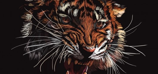 wallpaper hd tigre