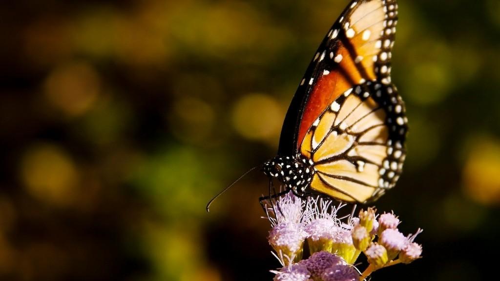 wallpaper de una bellas mariposa