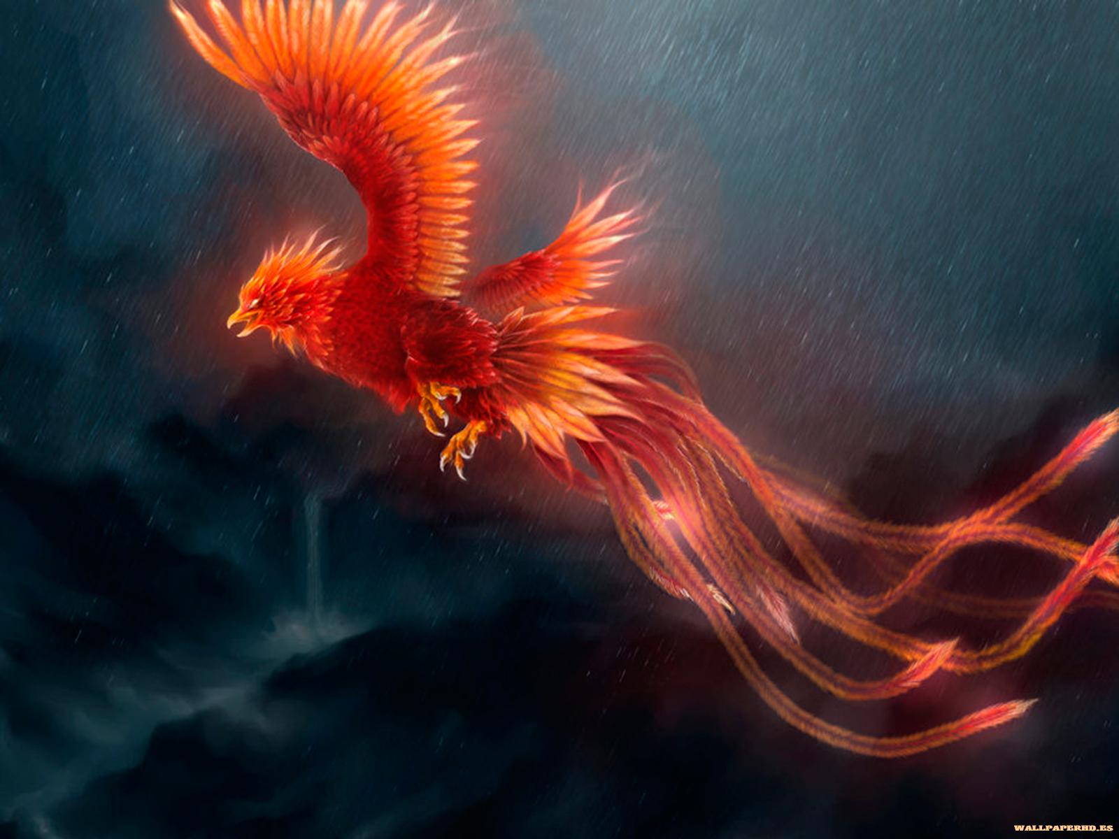 wallpaper del ave fenix