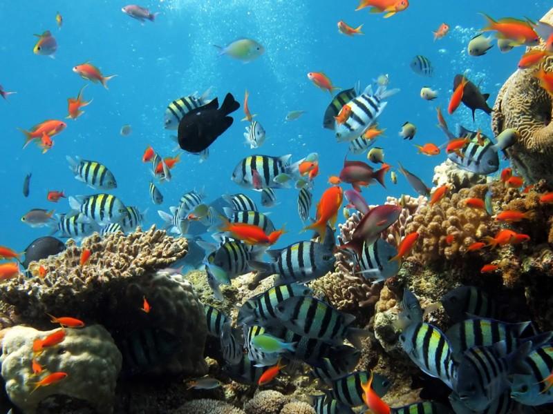 wallpaper hd vista submarina