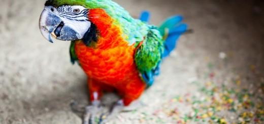 wallpaper hd animales: loro de colores