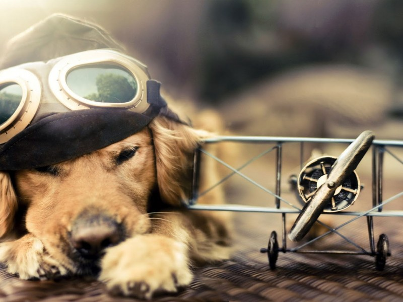 perro y avion wallpaper hd